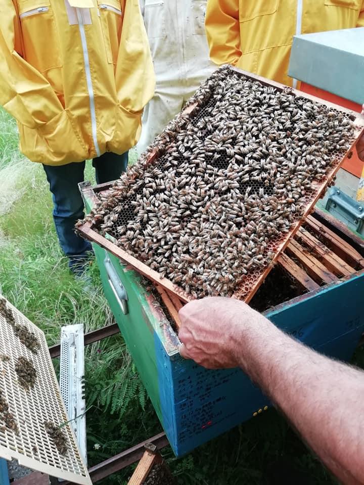 Il Grappa - MEL – Il Workshop internazionale tra apicoltori delle Riserve di Biosfera del Mediterraneo